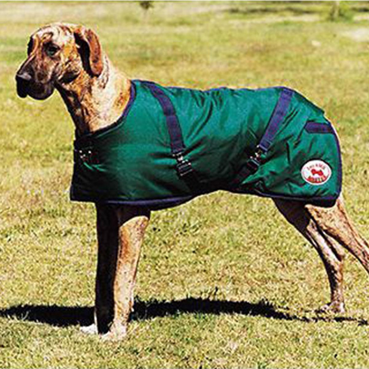 Dog On The Rug: THERMOMASTER Supreme Dog Rug